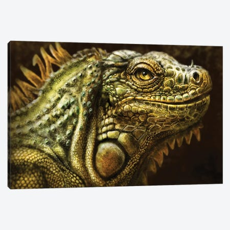 Iguana Canvas Print #PLA17} by Patrick LaMontagne Canvas Artwork