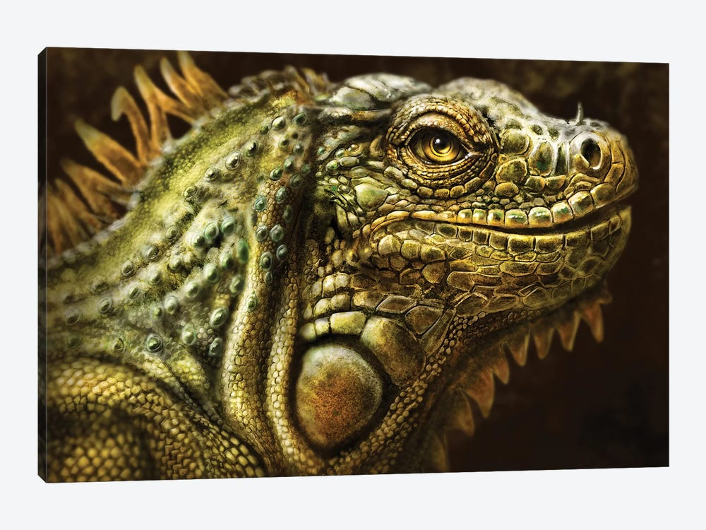 Iguana by Patrick LaMontagne 1-piece Canvas Artwork