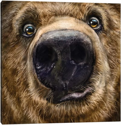 Kodiak Closeup Canvas Art Print