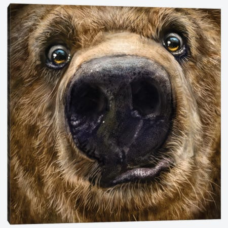 Kodiak Closeup Canvas Print #PLA19} by Patrick LaMontagne Art Print