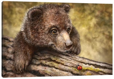 Kodiak Cub Canvas Art Print