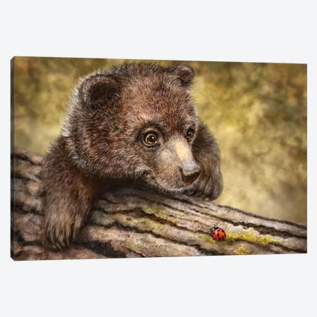 Kodiak Cub Canvas Print #PLA20} by Patrick LaMontagne Canvas Artwork