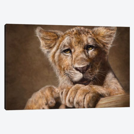 Lion Cub 3-Piece Canvas #PLA23} by Patrick LaMontagne Canvas Wall Art