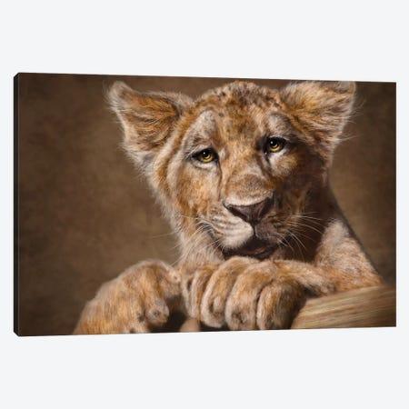 Lion Cub Canvas Print #PLA23} by Patrick LaMontagne Canvas Wall Art