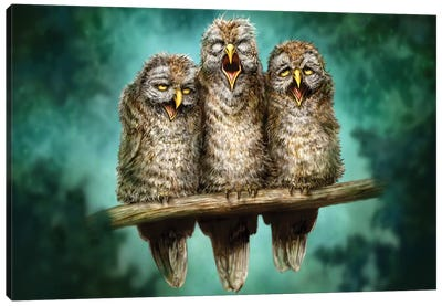 One Hoot Wonders Canvas Art Print