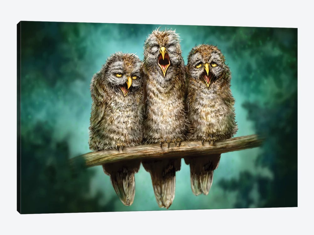 One Hoot Wonders by Patrick LaMontagne 1-piece Canvas Art