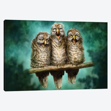 One Hoot Wonders 3-Piece Canvas #PLA26} by Patrick LaMontagne Canvas Print