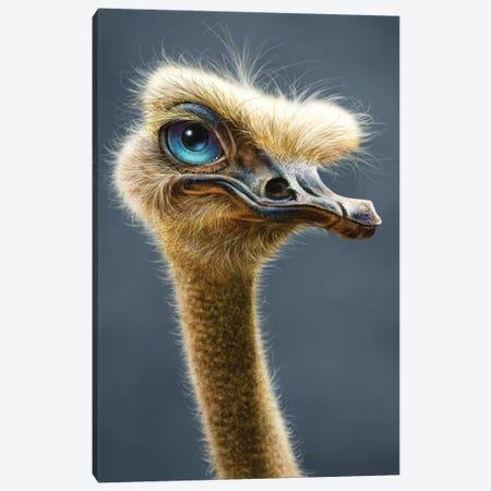 Ostrich Canvas Print #PLA28} by Patrick LaMontagne Canvas Art