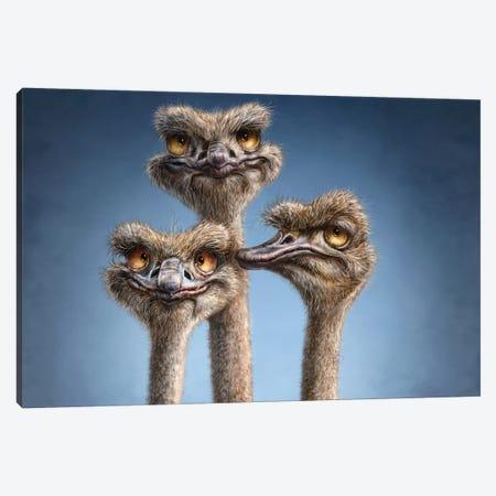 Ostrich Trio Canvas Print #PLA29} by Patrick LaMontagne Canvas Artwork