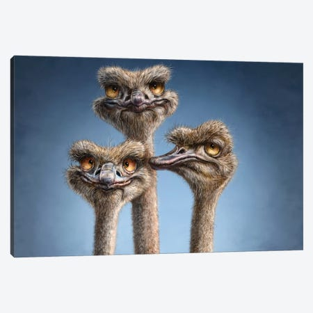 Ostrich Trio Canvas Print #PLA29} by Patrick Lamontagne Canvas Artwork