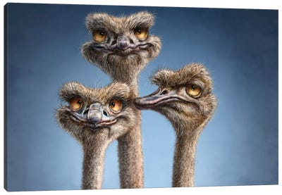 Ostrich Trio Canvas Art Print
