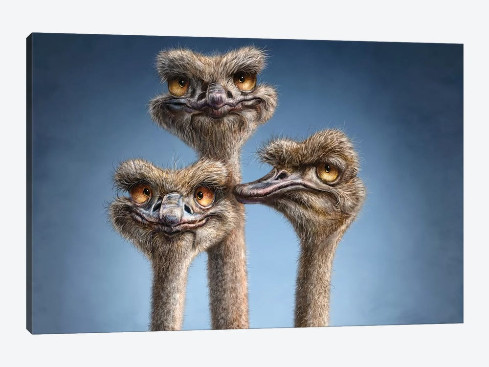 Ostrich Trio 1-piece Canvas Art Print