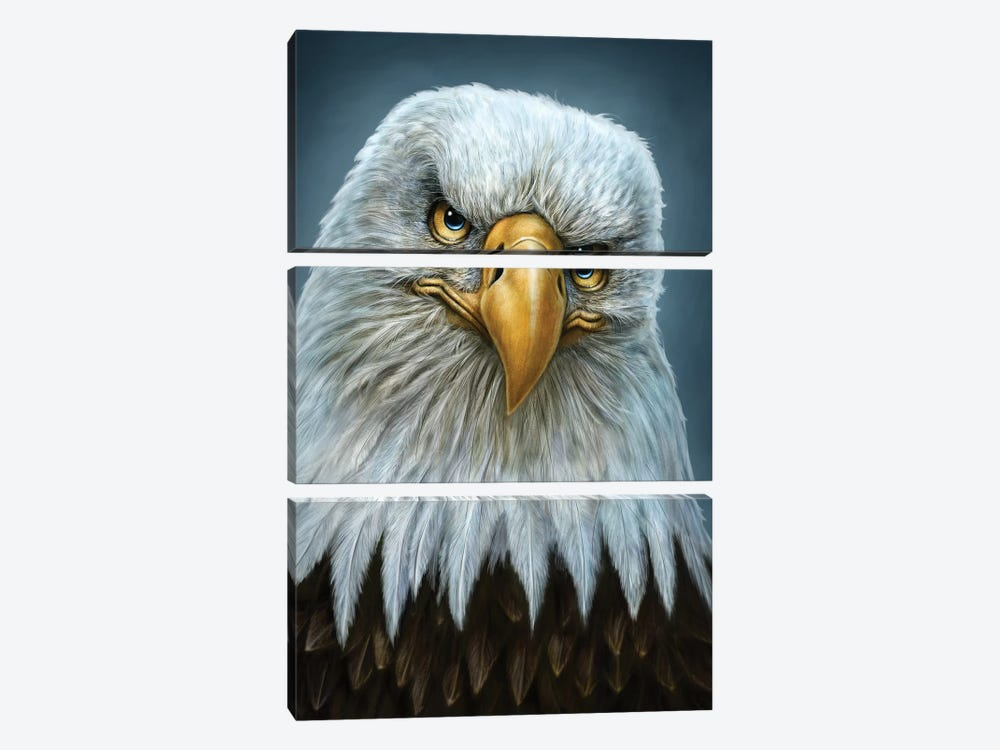 Bald Eagle by Patrick LaMontagne 3-piece Canvas Wall Art