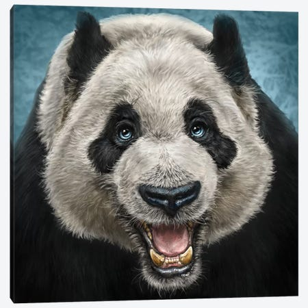 Panda Face Canvas Print #PLA31} by Patrick LaMontagne Canvas Art Print