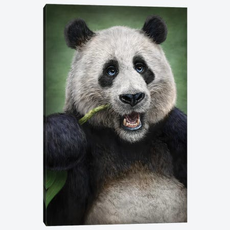 Panda Canvas Print #PLA32} by Patrick LaMontagne Canvas Print