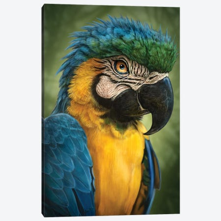 Parrot Canvas Print #PLA33} by Patrick LaMontagne Canvas Art Print