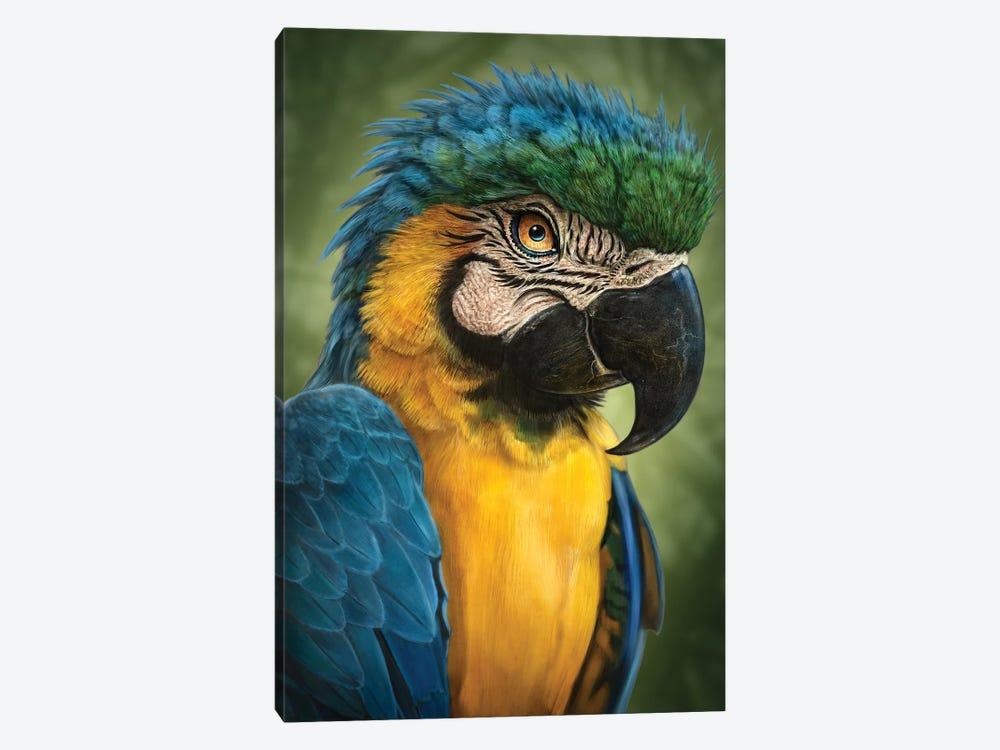 Parrot by Patrick LaMontagne 1-piece Canvas Art