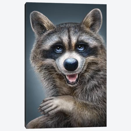 Raccoon Canvas Print #PLA36} by Patrick LaMontagne Canvas Artwork