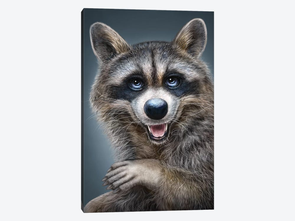 Raccoon by Patrick LaMontagne 1-piece Art Print