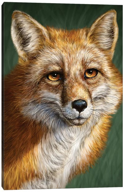 Red Fox Canvas Art Print