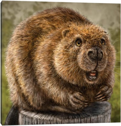 Beaver Canvas Art Print