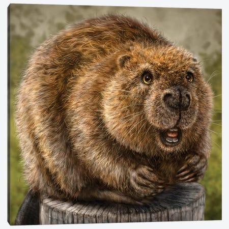 Beaver Canvas Print #PLA3} by Patrick LaMontagne Canvas Print