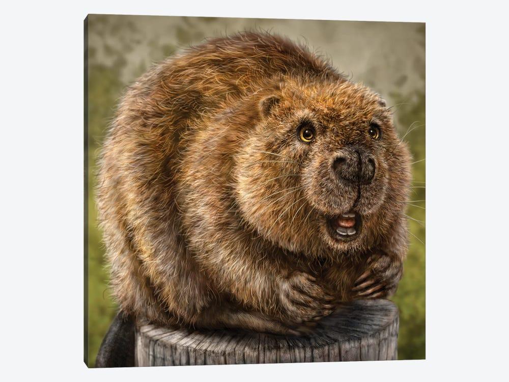 Beaver by Patrick LaMontagne 1-piece Canvas Art Print