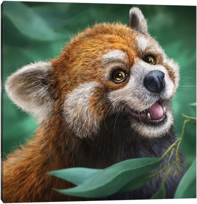 Red Panda Canvas Art Print