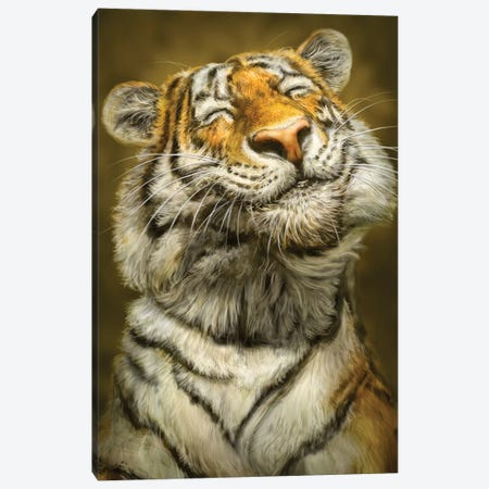 Smiling Tiger 3-Piece Canvas #PLA43} by Patrick LaMontagne Canvas Art