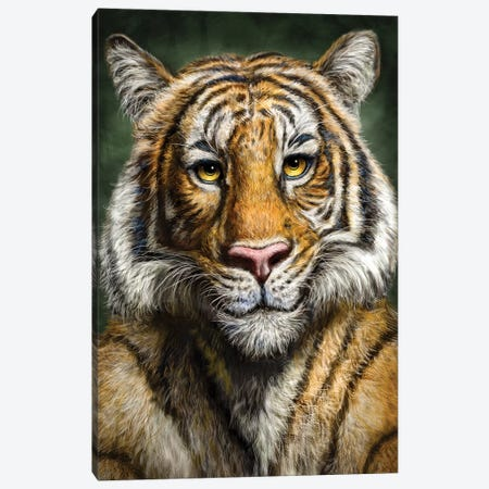 Tiger 3-Piece Canvas #PLA47} by Patrick LaMontagne Art Print