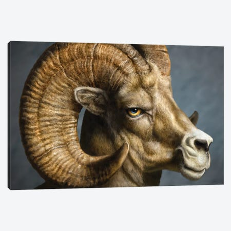 Bighorn Totem Canvas Print #PLA4} by Patrick Lamontagne Canvas Artwork