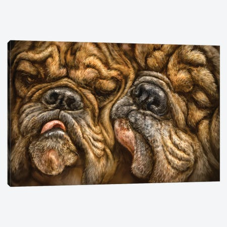 Wrinkles Canvas Print #PLA50} by Patrick LaMontagne Canvas Art Print
