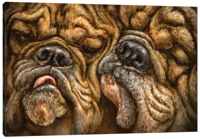 Wrinkles Canvas Art Print