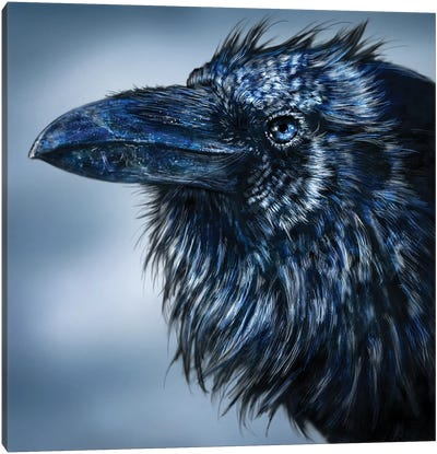 Blue-Beaked Raven Canvas Art Print