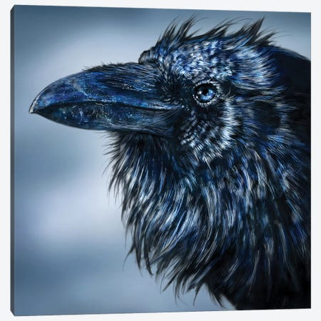 Blue Beak Raven Canvas Print #PLA8} by Patrick Lamontagne Art Print