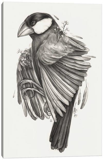 Finch Bird Canvas Art Print