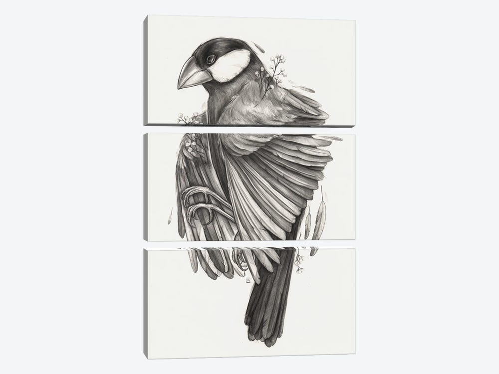 Finch Bird by Polina Kharlamova 3-piece Canvas Wall Art