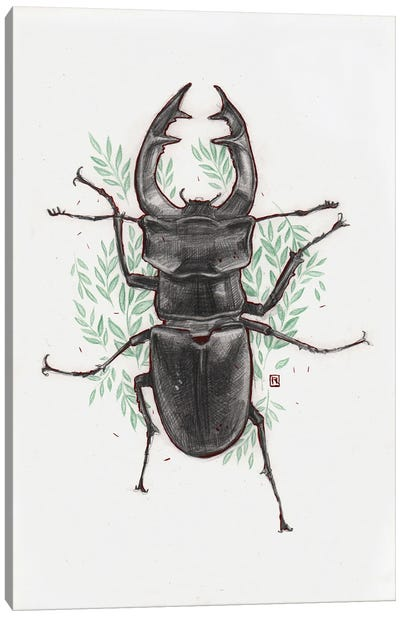 Stag Beetle Canvas Art Print