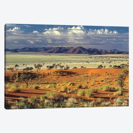 Tok Tokkie Desert 3-Piece Canvas #PLS13} by Marc Pelissier Art Print
