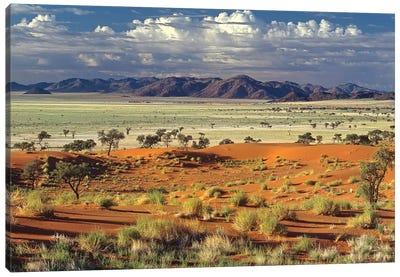 Tok Tokkie Desert Canvas Art Print