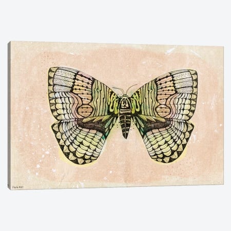 Moth Patterns Canvas Print #PMI26} by Sweet William Canvas Artwork