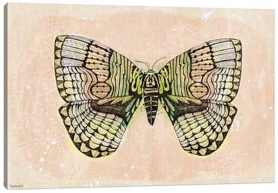 Moth Patterns Canvas Art Print