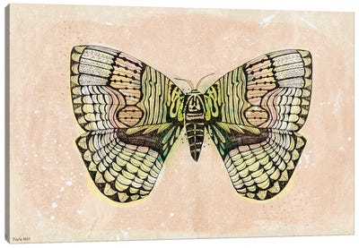 Moth Patterns Canvas Art Print