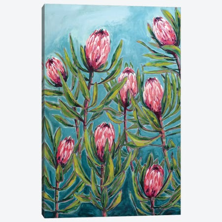 Pink Protea Painting Canvas Print #PMI48} by Sweet William Canvas Print