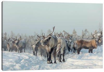 Reindeers Canvas Art Print