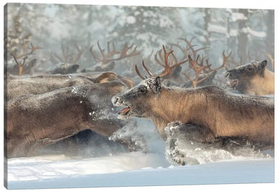 Reindeers Iii Canvas Art Print