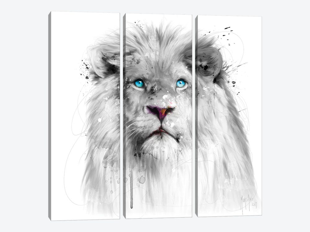 Lion White by Patrice Murciano 3-piece Canvas Art
