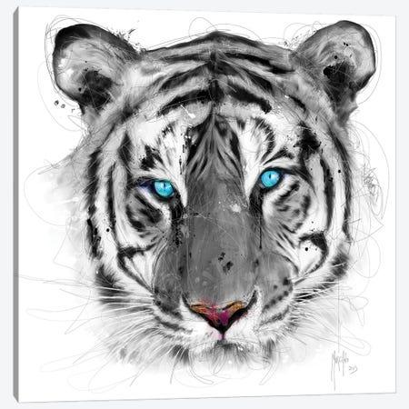 White Tiger Canvas Print #PMU45} by Patrice Murciano Canvas Art