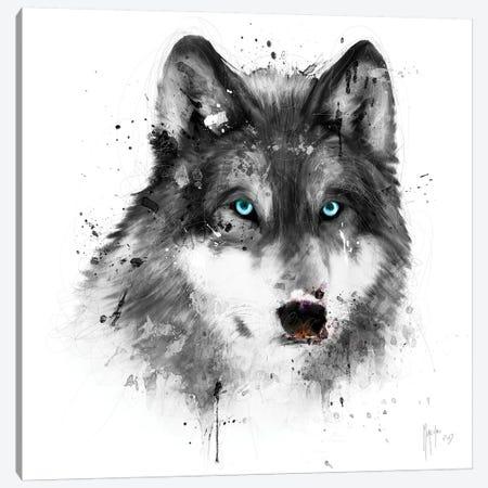 White Wolf Canvas Print #PMU46} by Patrice Murciano Canvas Artwork
