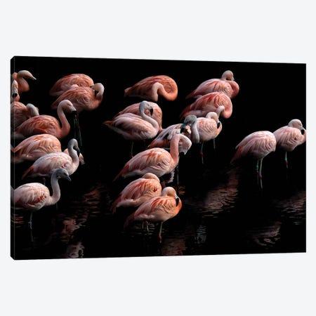 Flamingo Canvas Print #PNE11} by Paul Neville Canvas Artwork